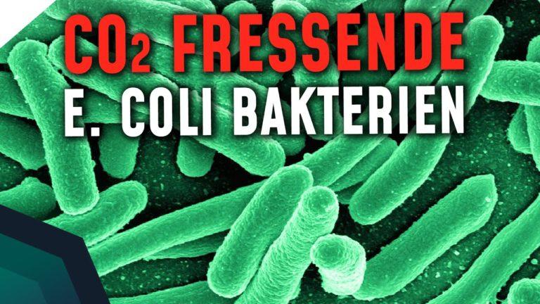 CO2 fressende Bakterien